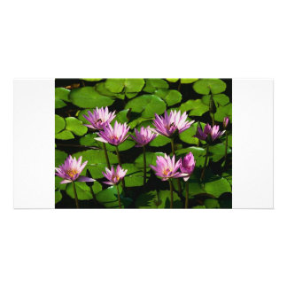 Water lilies customized photo card