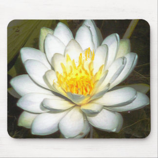 Water Lilly by Robert E Meisinger Mouse Pads