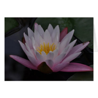Water lilly card