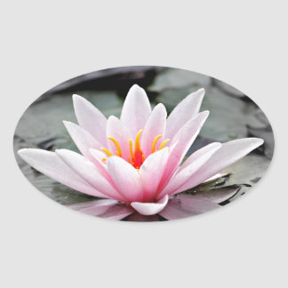 Water Lily #2 Oval Sticker