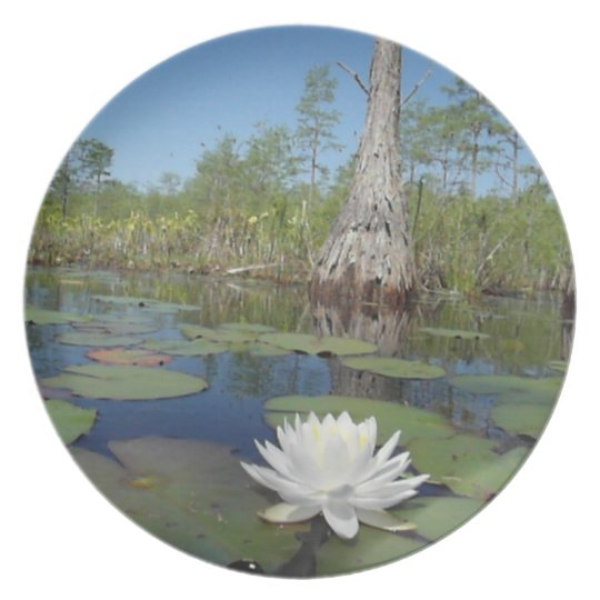 Water Lily 2 Plate