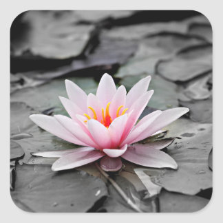 Water Lily #2 Square Sticker