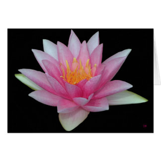 Water Lily Blank Greeting Cards