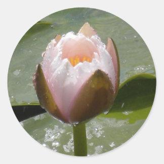 Water Lily Bud Classic Round Sticker