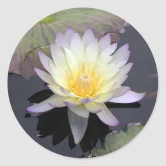 Water Lily Classic Round Sticker