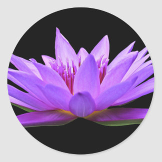 water-lily classic round sticker
