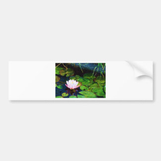 Water lily floating in a pond bumper sticker