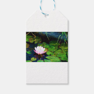 Water lily floating in a pond gift tags