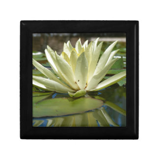 Water lily gift box