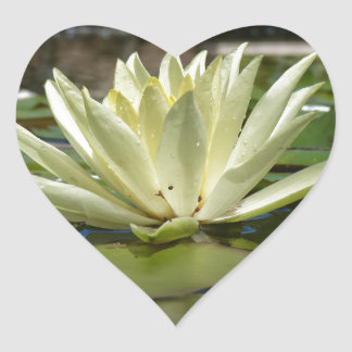 Water lily heart sticker