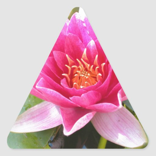 Water Lily Lotus Flower Triangle Stickers