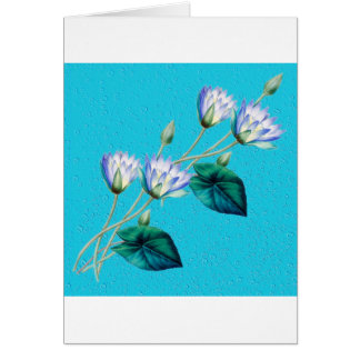 Water Lily On Blue Card