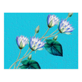 Water Lily On Blue Postcard