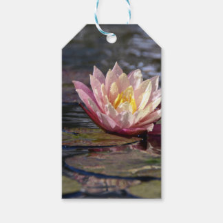 Water Lily Pack Of Gift Tags