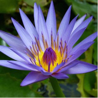 Water Lily Photo Cutouts