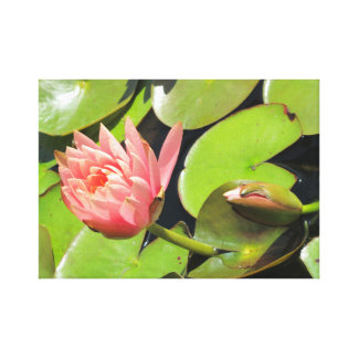 Water lily pink in a pond canvas print
