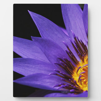 water-lily plaque