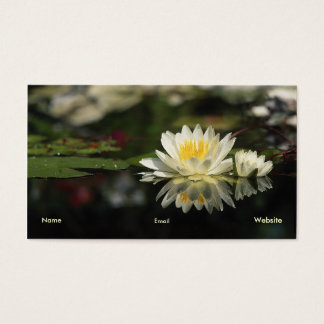 Water Lily Profile Card