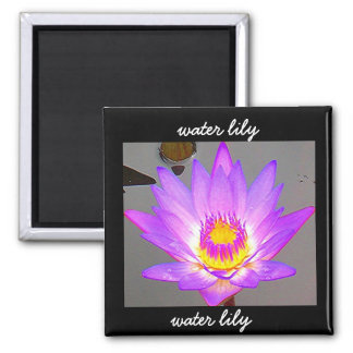 Water Lily Purple - Border Magnet