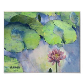 Water Lily Reflections Photo Print