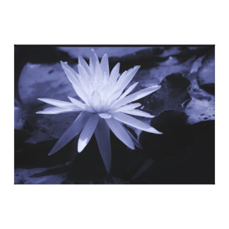 Water Lily Slick Canvas Print
