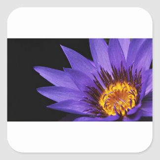 water-lily square sticker
