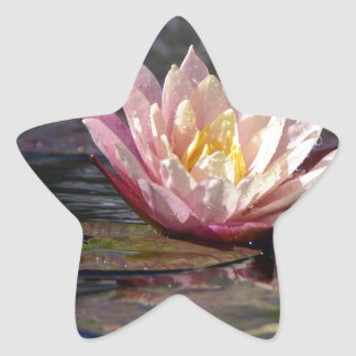 Water Lily Star Sticker