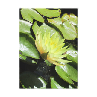 Water lily yellow in a pond canvas print