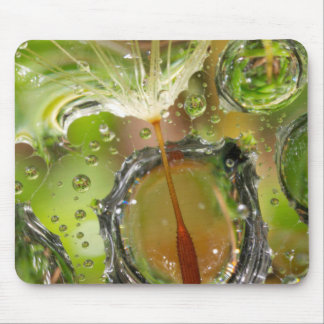 Water on dandelion seed, CA Mouse Pad