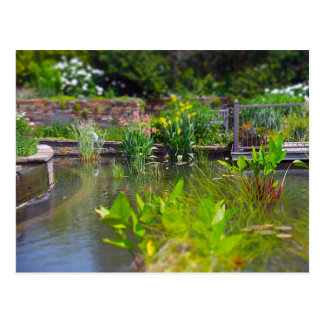 Water Plants in Pond Powell Gardens, Kansas City Postcard