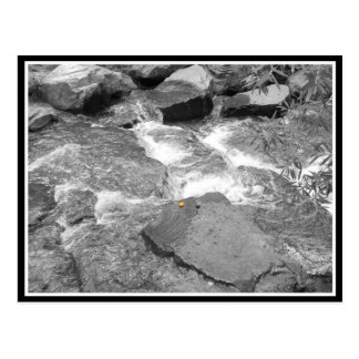 Water & Rocks Postcard