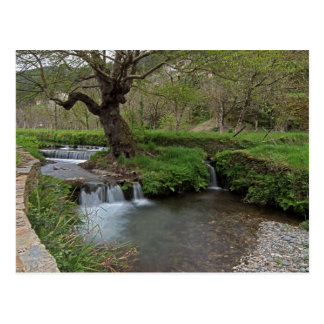 Water rushing by tree postcard