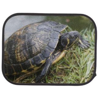 Water Turtle Car Mat