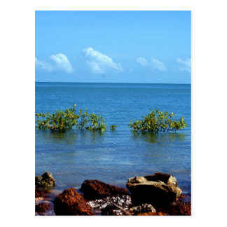 Water View Darwin Postcard