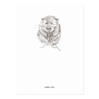 Water Vole Postcard