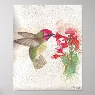Watercolor Anna's Hummingbird Poster