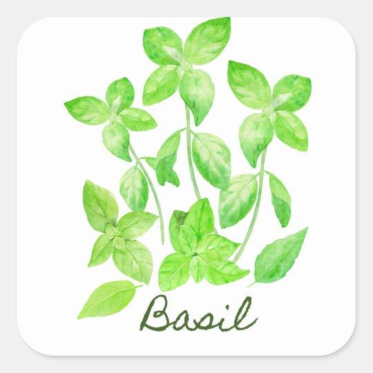 Watercolor basil illustration square sticker