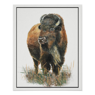 Watercolor Bison Buffalo Animal Nature art Poster