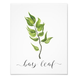 Watercolor Botanical Herb Print Bay Leaf