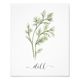 Watercolor Botanical Herb Print Dill