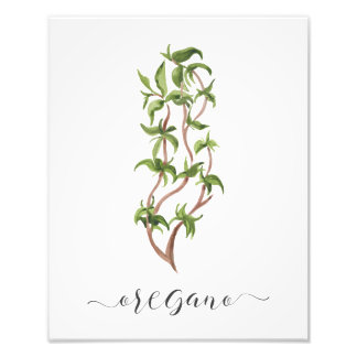 Watercolor Botanical Herb Print Oregano
