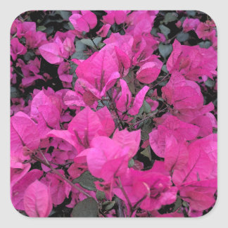 Watercolor-Bougainvillea Square Sticker