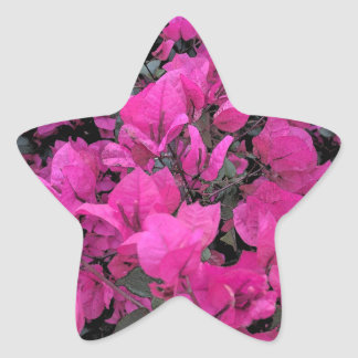 Watercolor-Bougainvillea Star Sticker