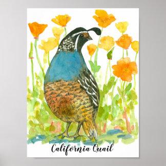 Watercolor California Quail Bird Poster