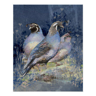 Watercolor California Quails Bird and Landscape Poster