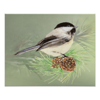 Watercolor Chickadee Bird PineTree cone Poster