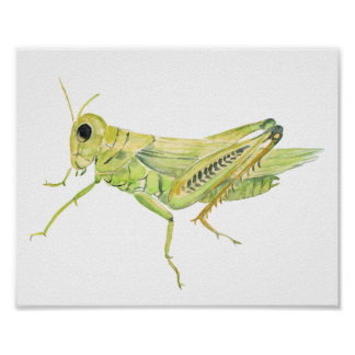 Watercolor grasshopper nursery print