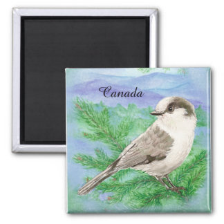 Watercolor Gray, Grey or Canada Jay Bird Custom Square Magnet