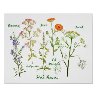 Watercolor Herb Flowers Illustration Poster