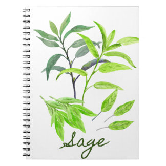 Watercolor herb sage illustration notebooks